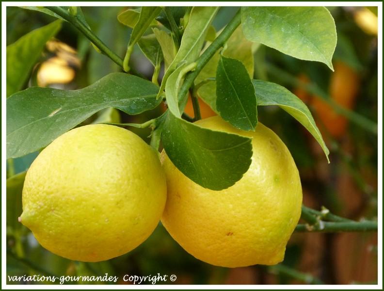 Variations Gourmandes Les agrumes de Menton Fte du Citron 2012