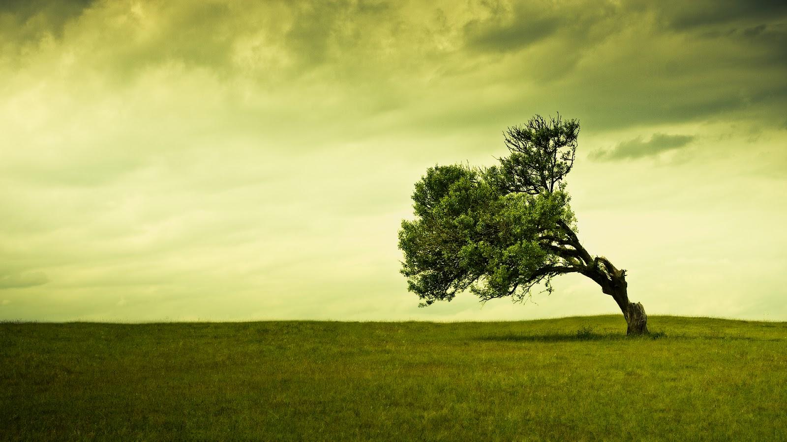 Sweetcouple hd tree background wallpapers free green - Green nature wallpaper full hd ...