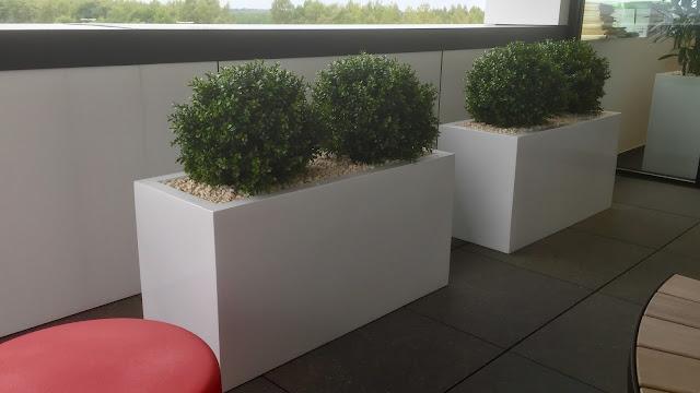 Kunstplanten huren of kopen België.  Kunstbuxus in lange witte bakken voor buiten. Prijzen op annvraag