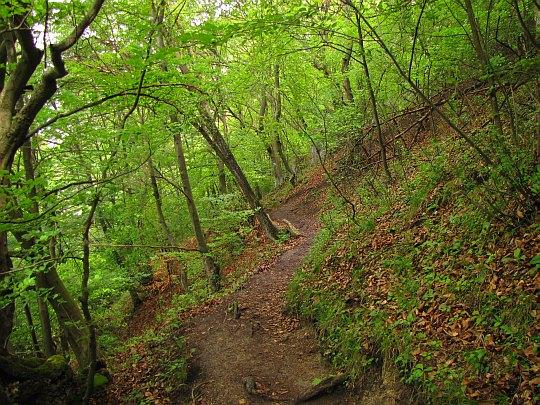 Dalej leśną ścieżką.