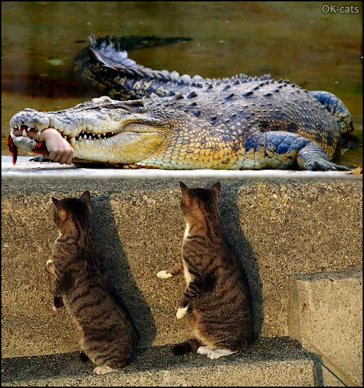 Photoshopped Cat picture • Drama! Huge Crocodile ate human cats are orphans