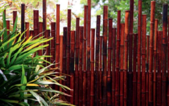 Beautiful Bamboo garden, Bamboo garden, Screening Bamboo, Bamboo fence