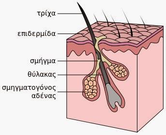 Τριχόπτωση - πρόληψη και θεραπεία, από το φαρμακείο της φύσης