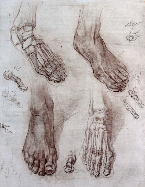 Foot anatomy drawing