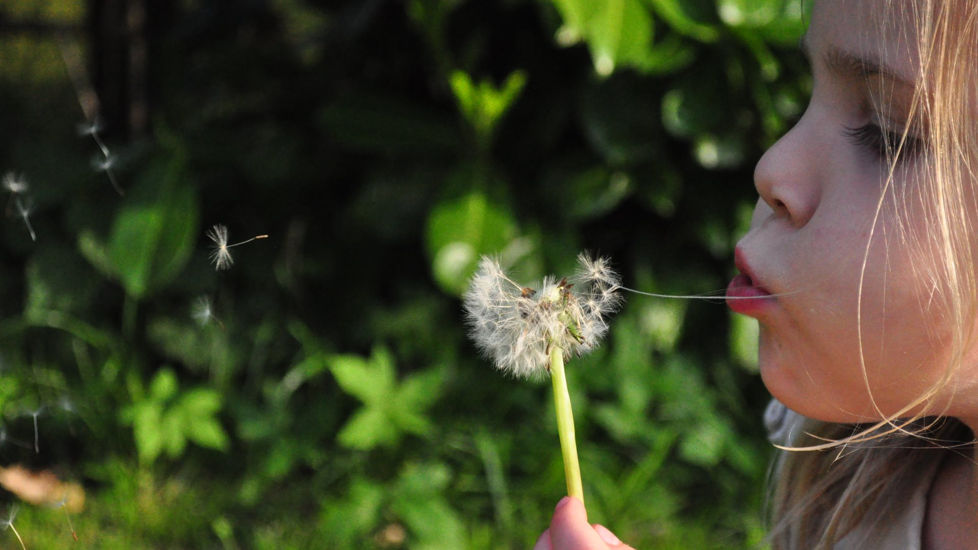 Little Girl Blowing Dandelion HD