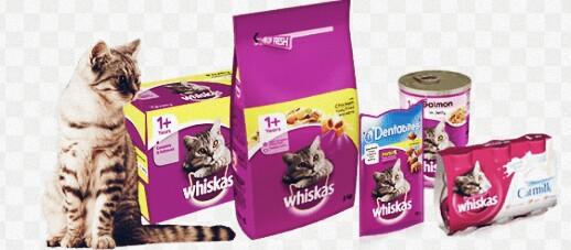 10 Makanan Kucing Persia Yang Bagus Dan Menyehatkan