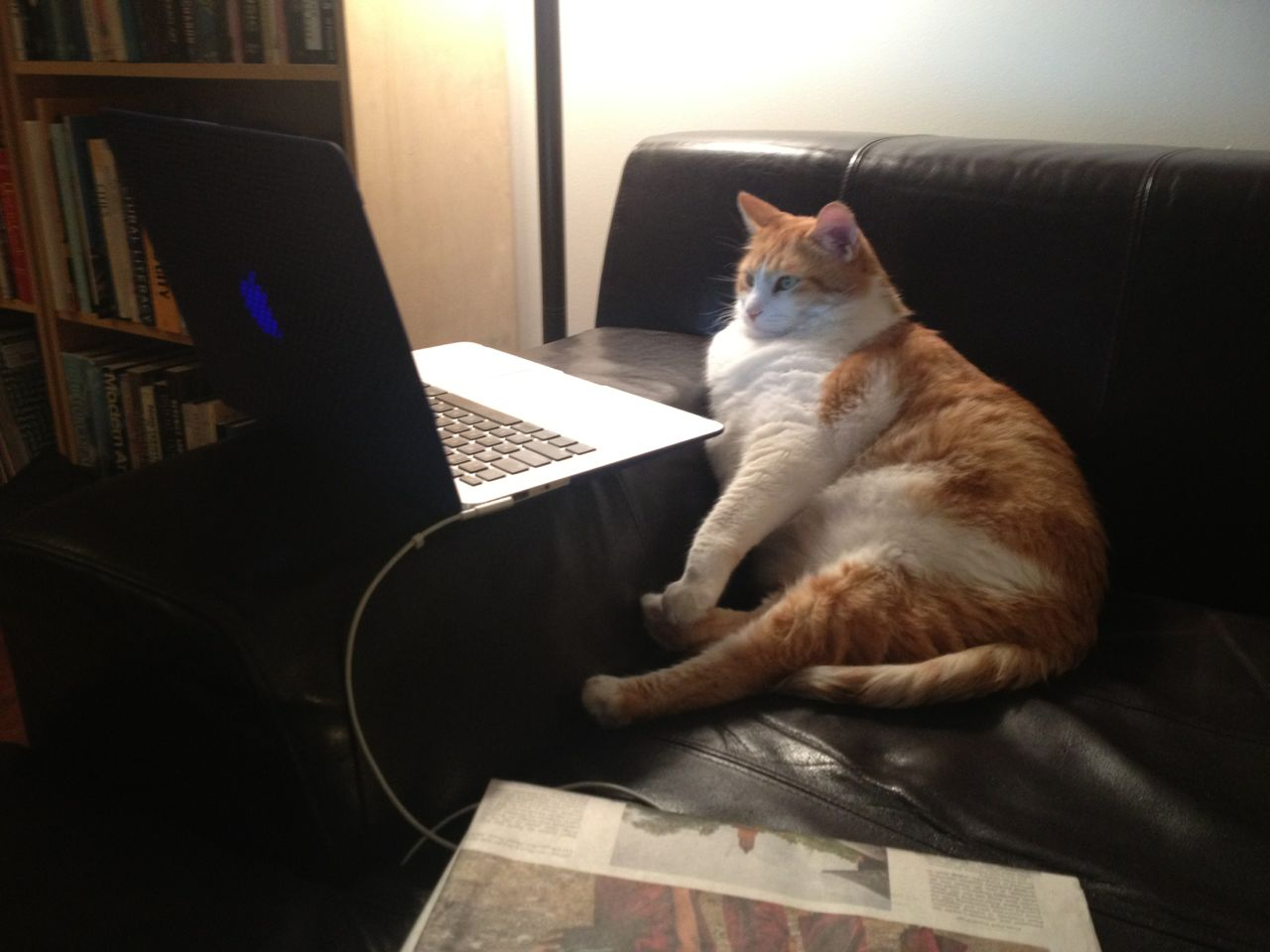 Interesting Pictures Funny: Funny Cats - Part 34 (25 Pics + 10 Gifs)