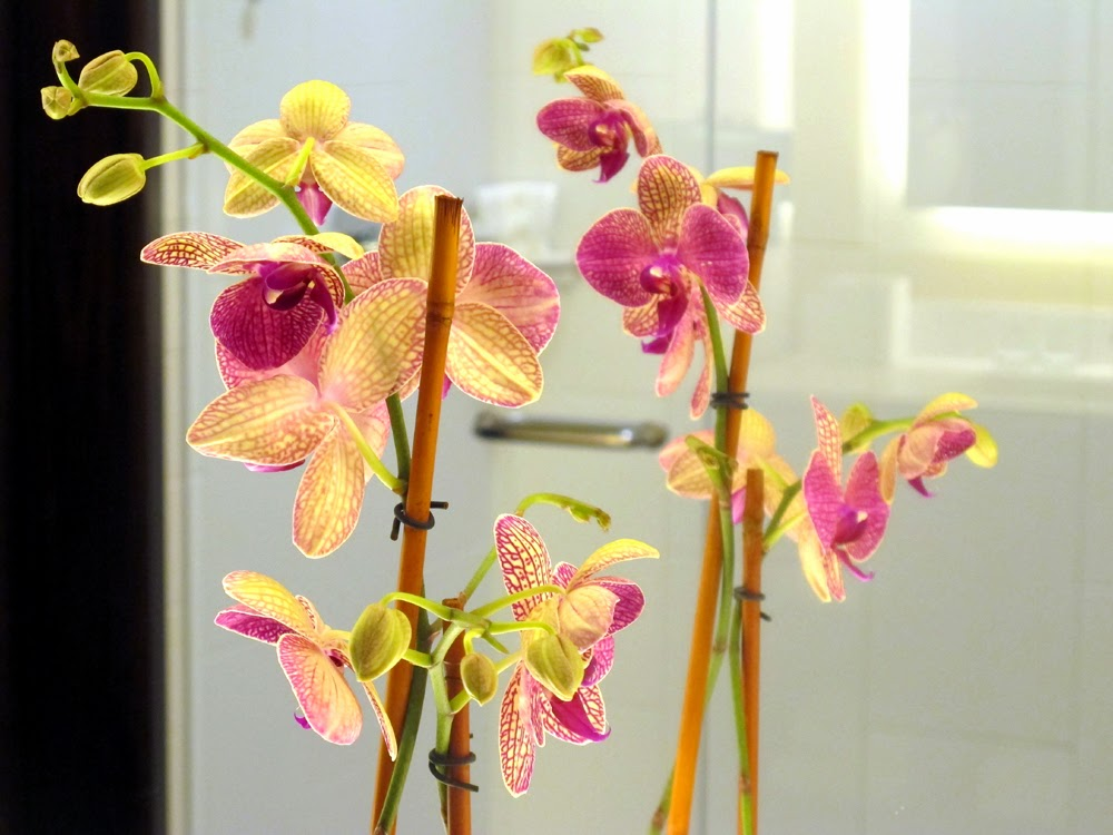 orchids in the bathroom