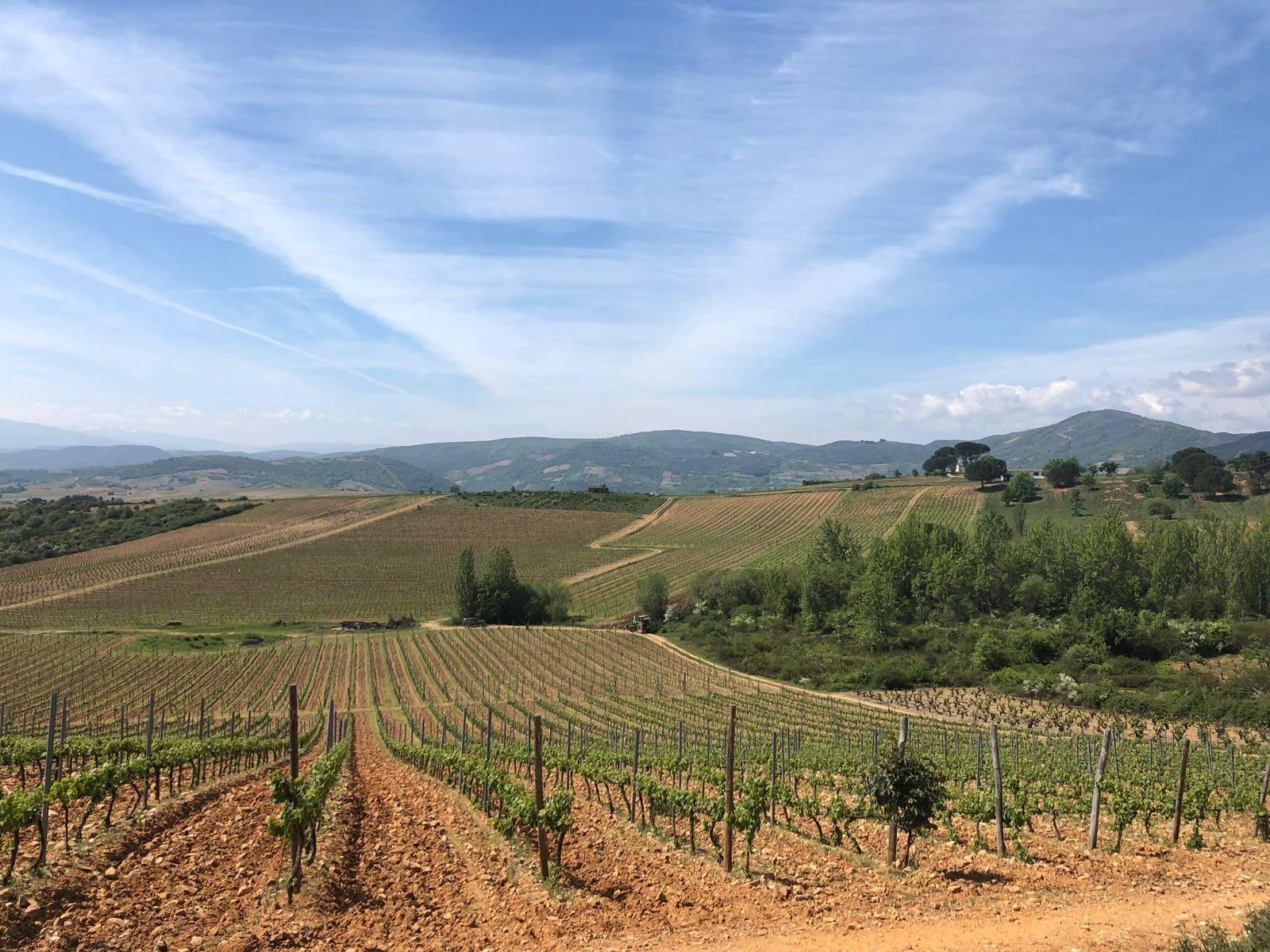 Vineyard view from the Palacio de Canedo Winery. Photo: © Authentic Journeys.
