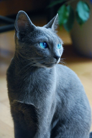 Warrior Cats Jayfeather Bugs Blog: Real life w...