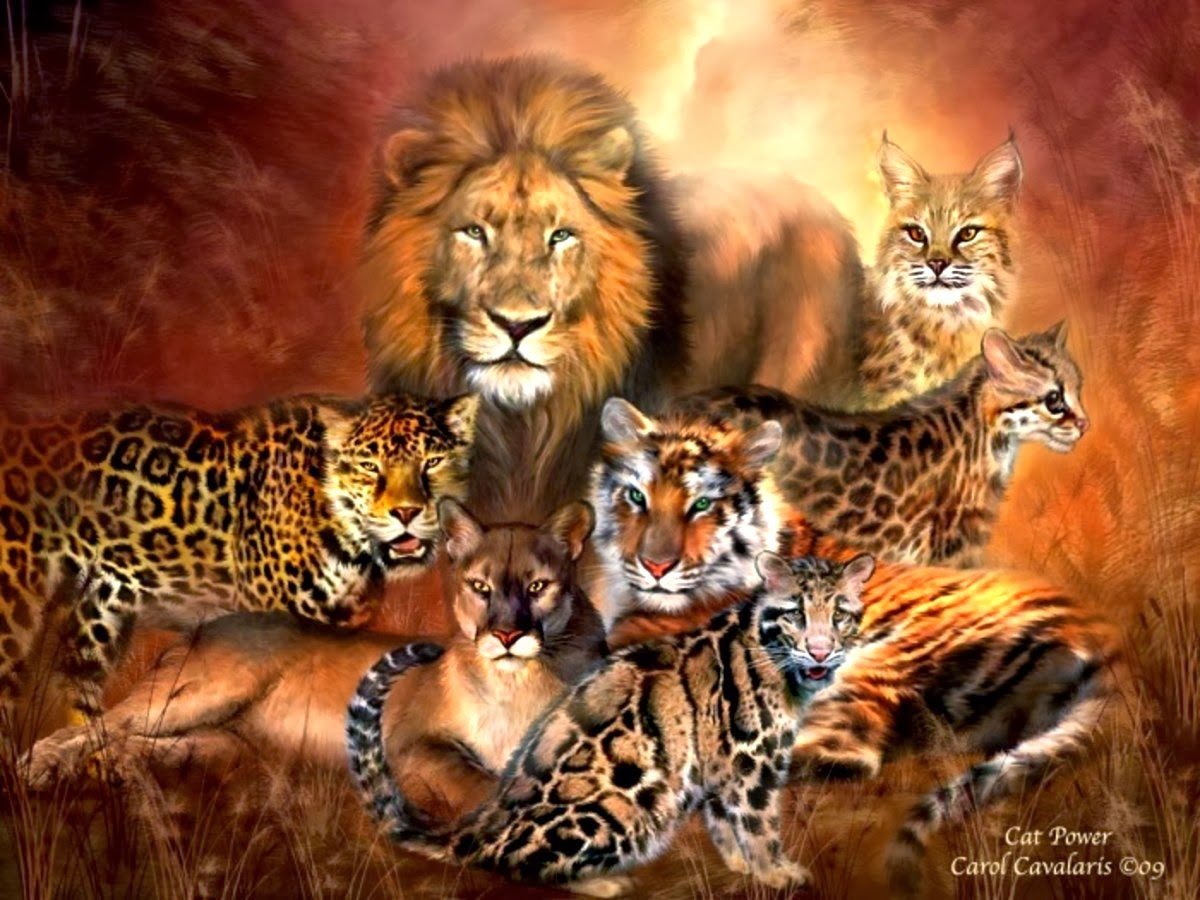 Blog fuad informasi dikongsi bersama the 7 big cat species - All animals hd wallpapers ...
