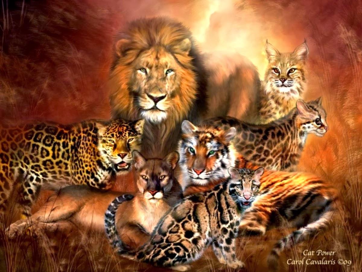 Lion family wallpaper - photo#43