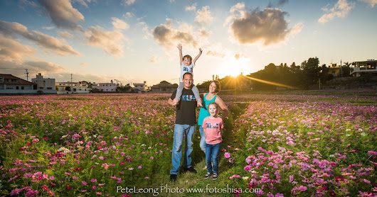 Cosmos flower fields family photos
