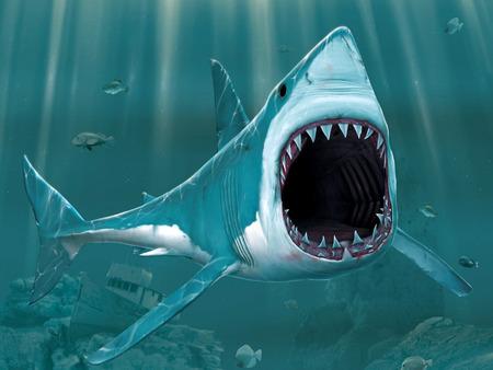Gambar Ikan Hiu  Gambar Keren dan Unik Wallpaper Foto