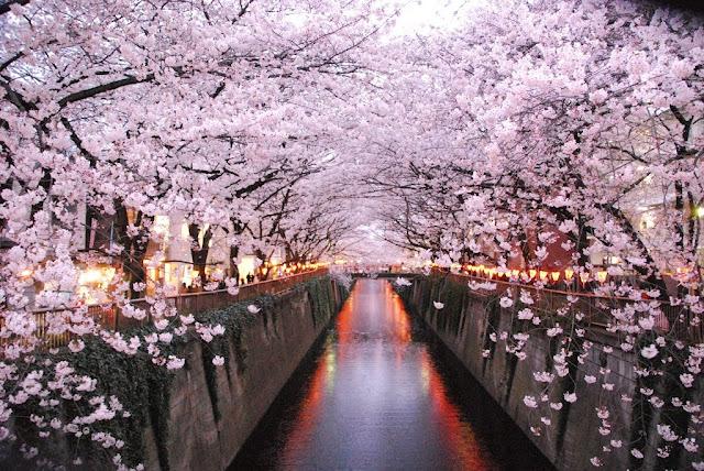 Hanami Giappone