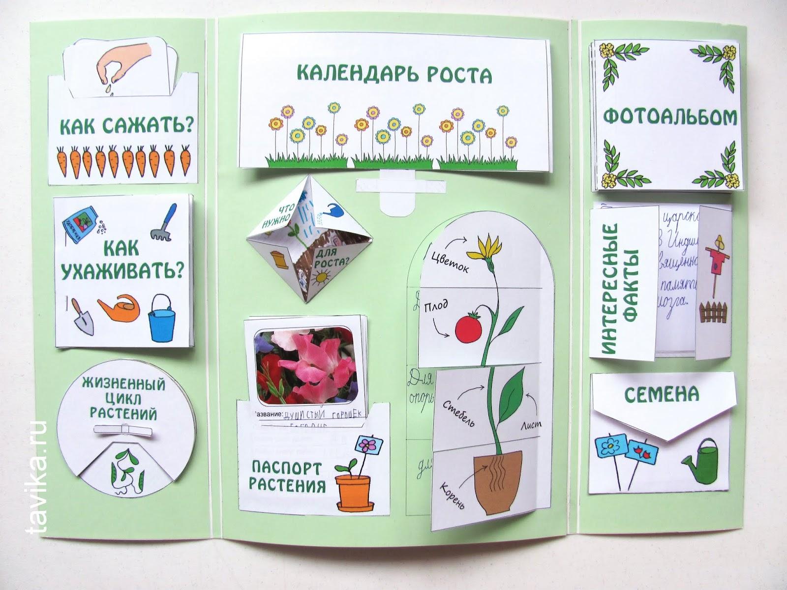 Лэпбук о растениях. Шаблоны для распечатки