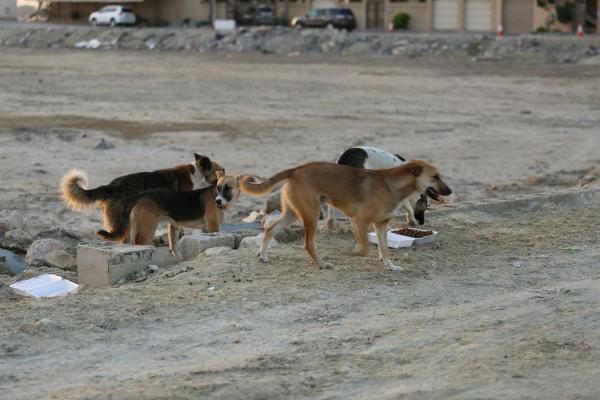 كلاب ضالة تهاجم طفلا صغيرا بأيت ملول