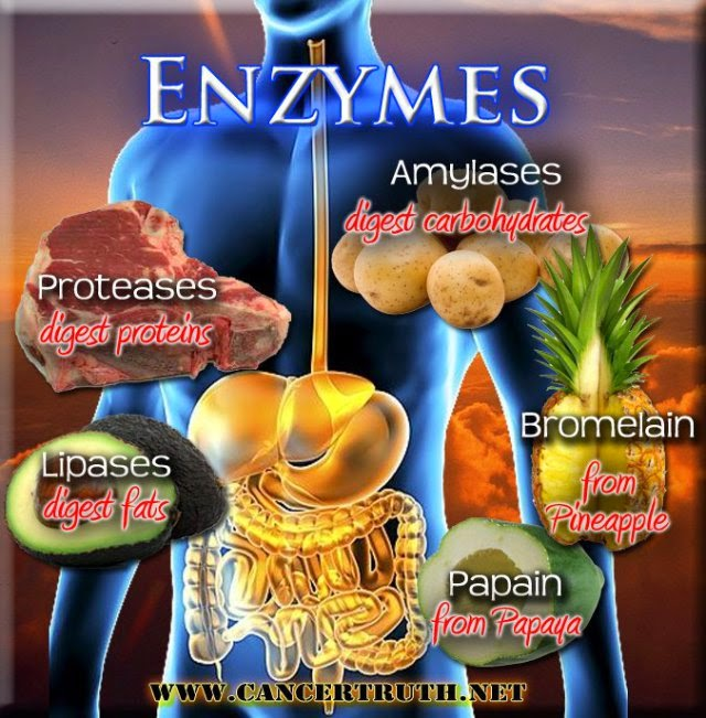 bonvictor.blogspot.com: Food enzymes and enzyme therapy