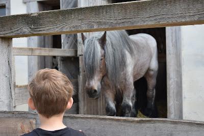 Alex besucht ein Pferd
