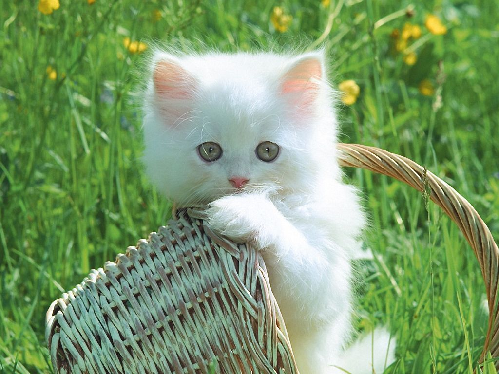 Fun For Enjoy Life Beautiful Cats Wallpapers