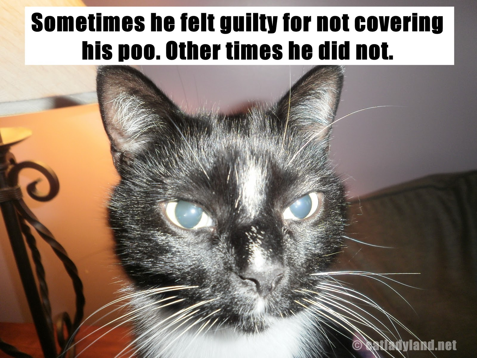 Funny Cats: Funny Image Collection: LOLCats