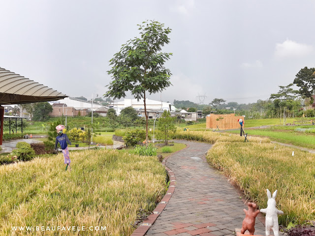 Area persawahan di The Wujil Resort and Convention