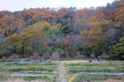 生坂村の古民家カフェ・ひとつ石の裏の里山と棚田