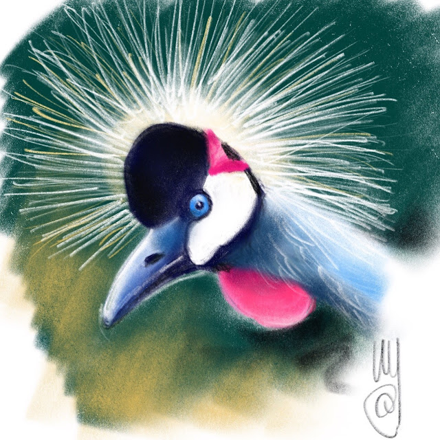 Black crowned crane. Bird painting by Artmagenta