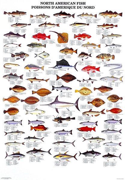 Peixes | Ictiologia