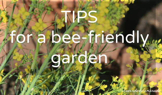 Simple steps for a bee-friendly garden!