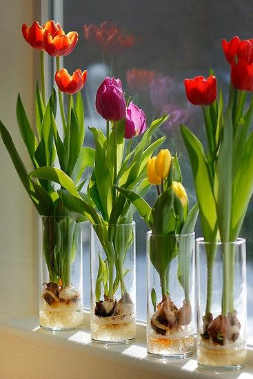 Bulbi In Vaso Di Vetro.Diy Party Wedding Ma Non Solo Tulipani Con Bulbo In Vaso