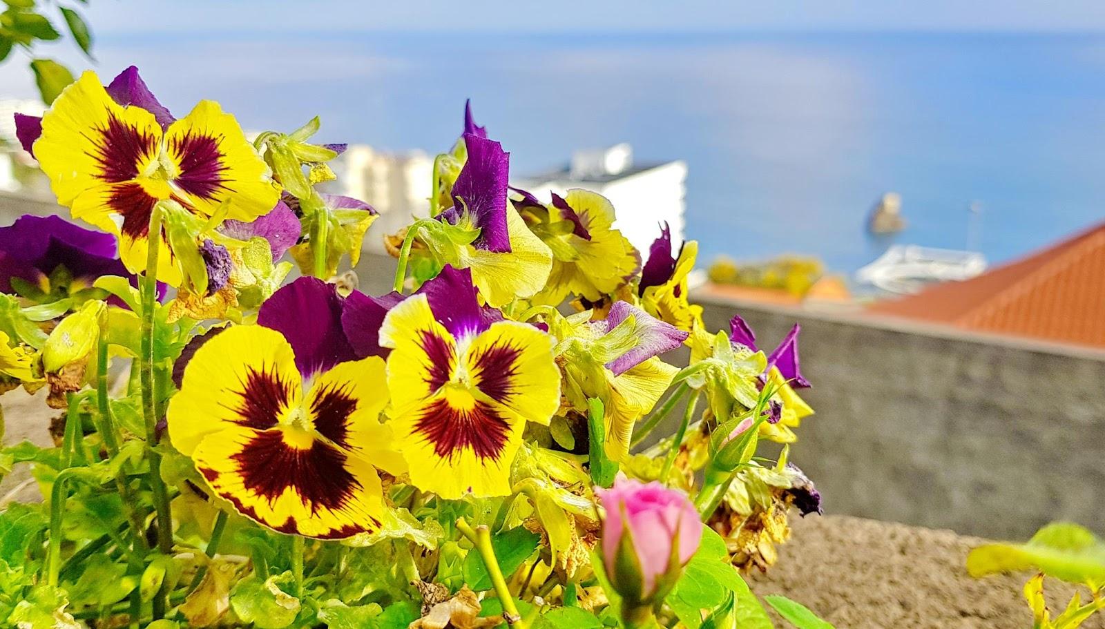 flores encantadas no ano que hoje começa