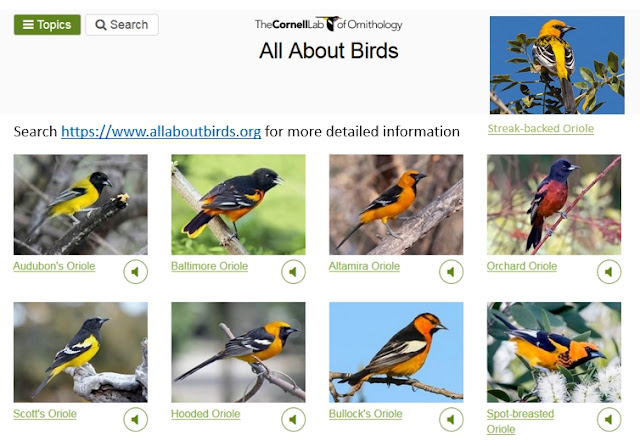 https://www.allaboutbirds.org/search/orioles