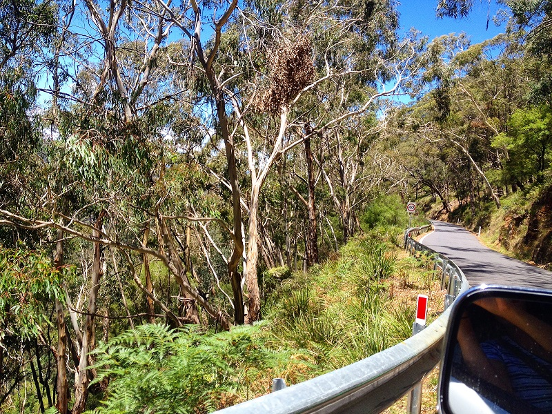 Come and read about 4WD driving, camping, exploring Jenolan caves and other adventures in the Blue Mountains, NSW.