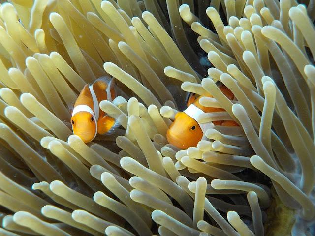 صورة تحت الماء ملتقطة بكاميرا نيكون Nikon Coolpix w100