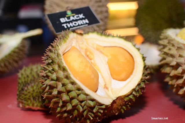 Black Thorn Durian, you know you want one!