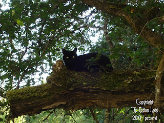 Lucky Black Cat Witchcraft, Pagan and Hoodoo Supplies