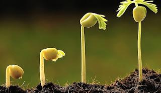 Νέα μέθοδος για την ανάπτυξη φυτών από σπόρους, σε μόλις 48 ώρες