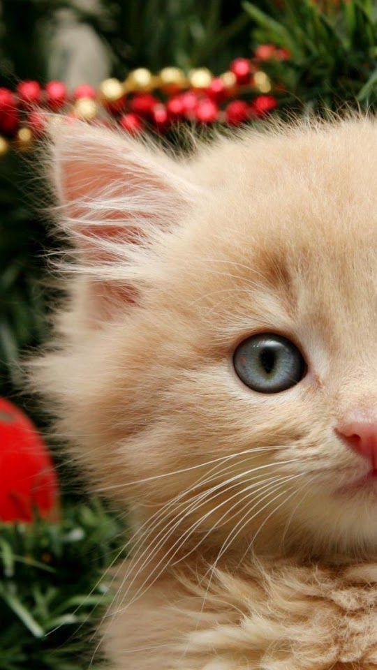 Curious Christmas Cat  Galaxy Note HD Wallpaper
