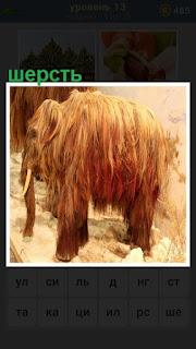 мамонт стоит покрытой шерстью с  бивнями