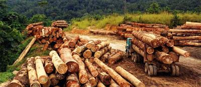 SDA dan Kegiatan Manusia terhadap Lingkungan 50 Soal IPA : SDA (Kegiatan Manusia Terhadap Lingkungan) + Jawaban