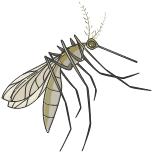Zika Vírus: Doenças transmissíveis e adquiridas