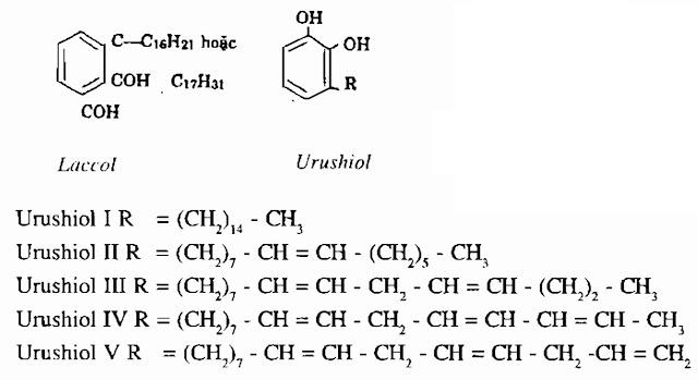 Thành phần hóa học Cây Sơn - Rhus succedanea - Nguyên liệu làm thuốc Có Chất Độc