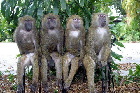 Download 93+ Gambar Monyet 4 Terbaik Gratis