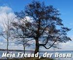 Mein Freund, der Baum...