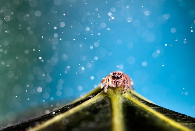 صور بعض الحشرات سبحان الله 6072914125_38d65dbe1