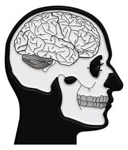 Epilepsi (Sara) Hastalığı Nedir ? Nasıl Tedavi Edilir ?