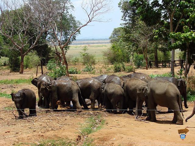 Elephant Transit Home - Sri Lanka