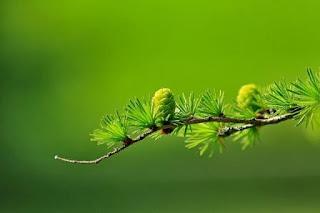 Puisi Alam Hilangnya Sapaan Bumiku Karya Nia