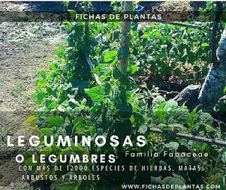 Fichas de Plantas leguminosas